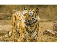 Wildlife tour & Tiger Safari Operator in India