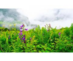 Valley of Flowers Trek 2020