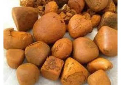 Buy Cow /Ox Gallstone available On Stock Now
